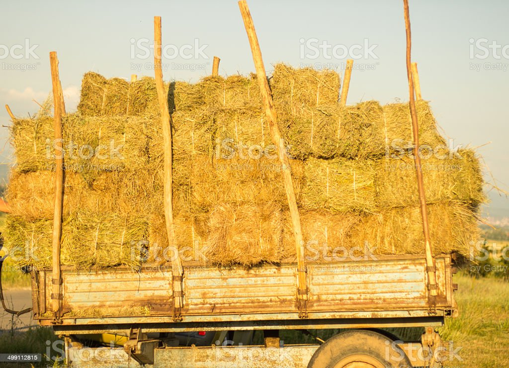 bales of hay on a trailer standing stock photo