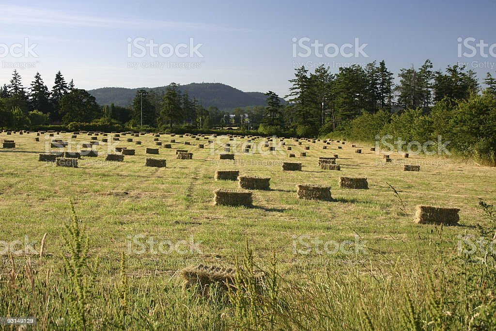 Bales of Hay on a Warm Summer Day royalty-free stock photo