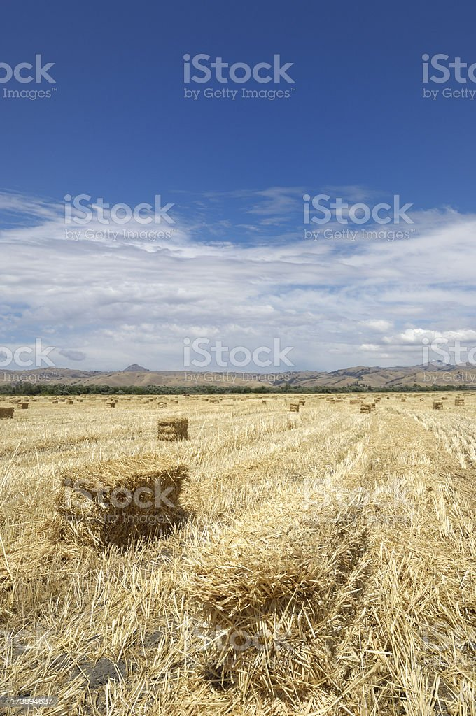 Bales of Hay on Field stock photo