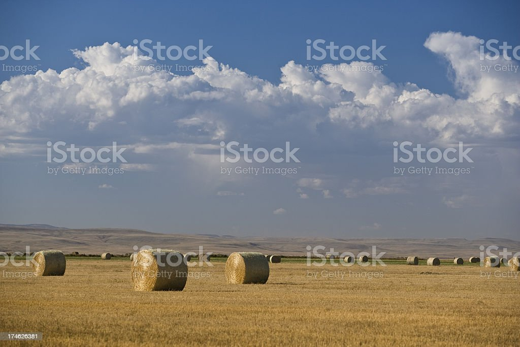 Bales of hay on the prairie royalty-free stock photo