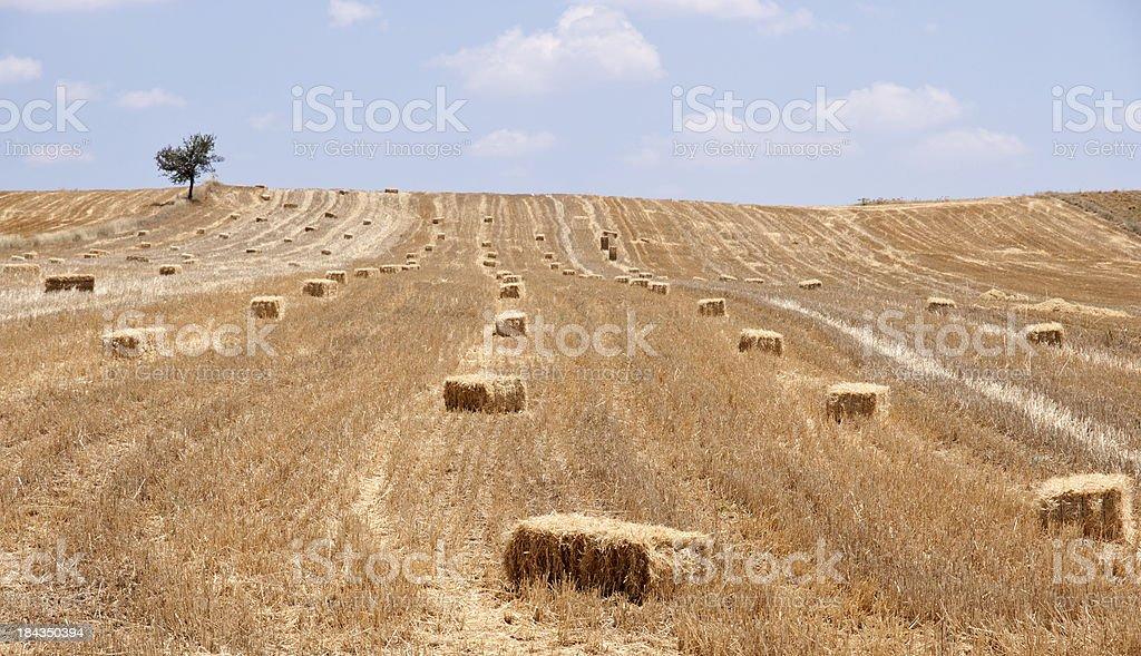 Bales of Hay royalty-free stock photo
