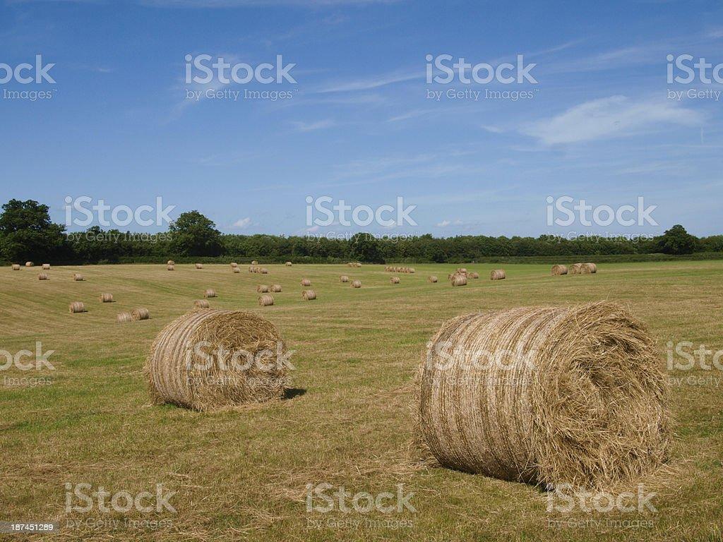 Bales of Hay stock photo