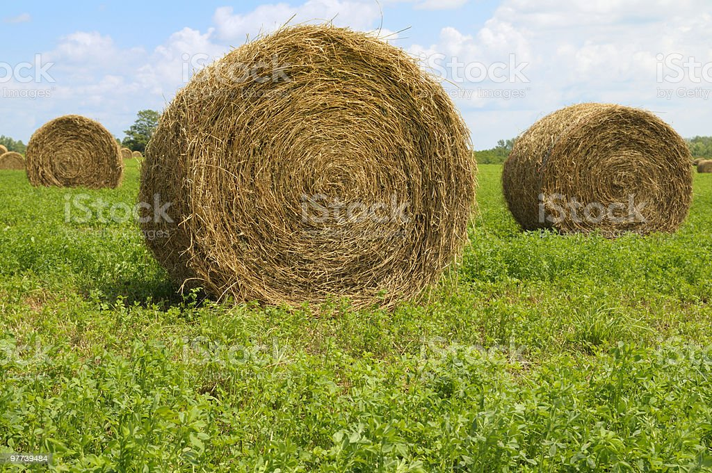 Bales of Hay royalty-free stock photo