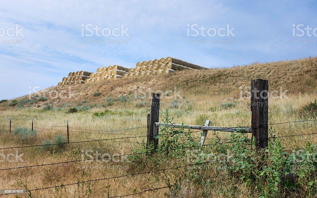 Bales of hay, Vermillion, Nebraska, USA. stock photo