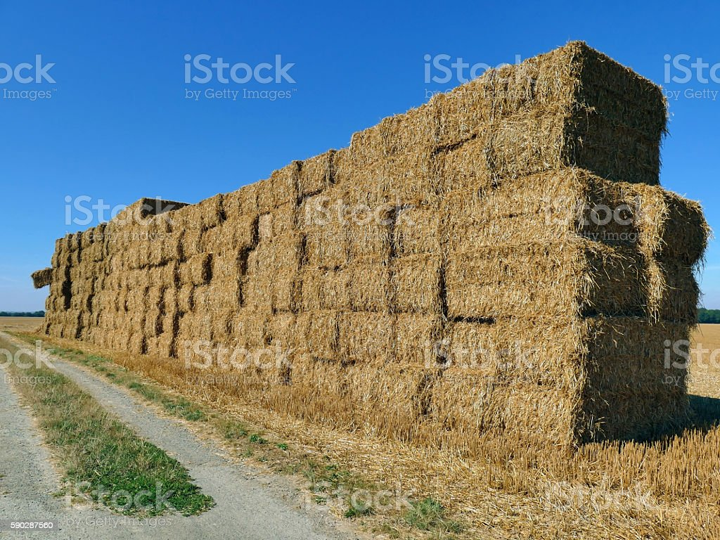 Bales of haystacks stacked as a wall on the field stock photo