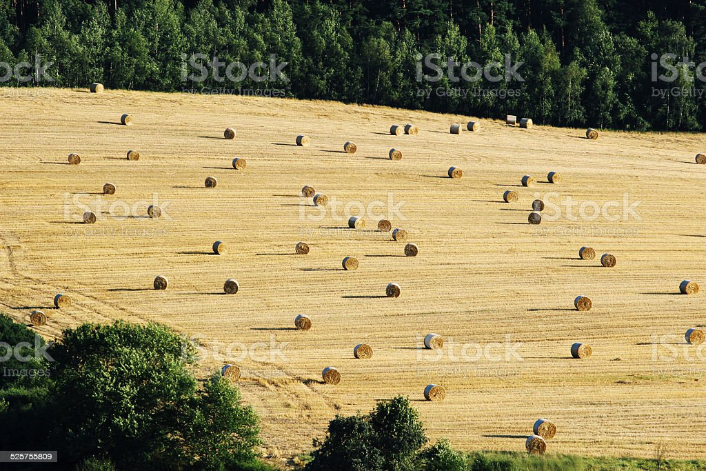 bales of hey on harvested agriculture field stock photo