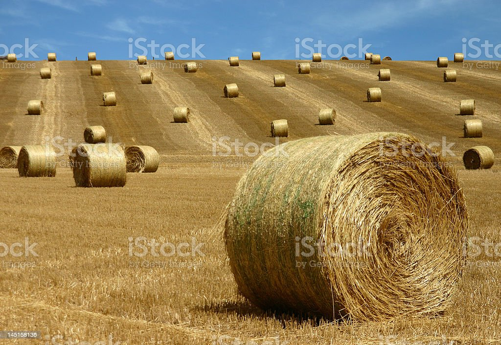 bales of straw royalty-free stock photo
