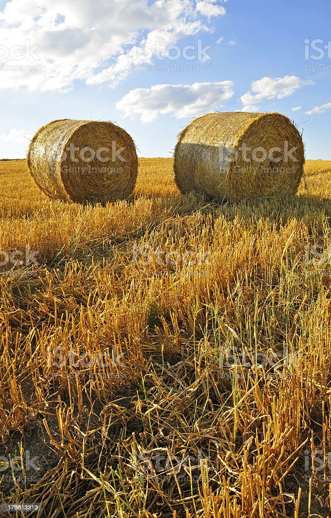 bales of wheat royalty-free stock photo