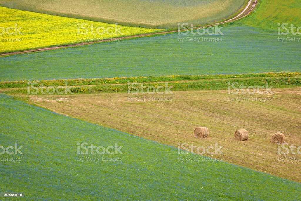 Bales  on Beautiful Flower Fields, Castelluccio di Norcia, Italy, Europe stock photo
