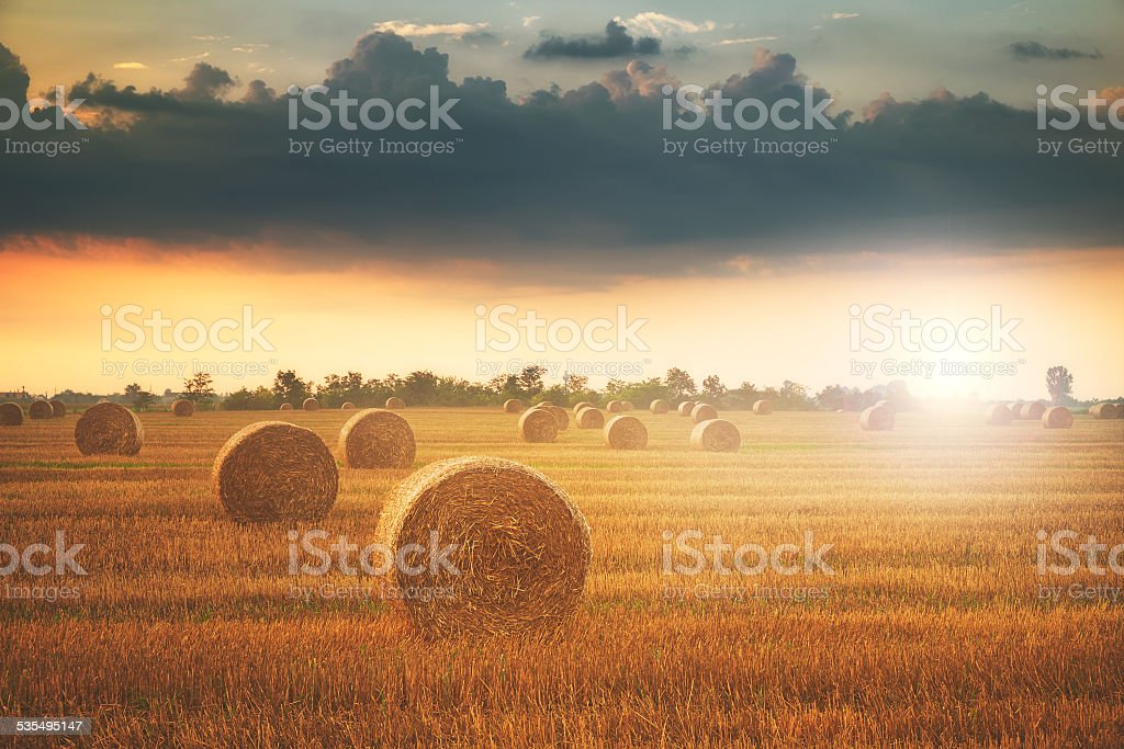Bales on the field stock photo