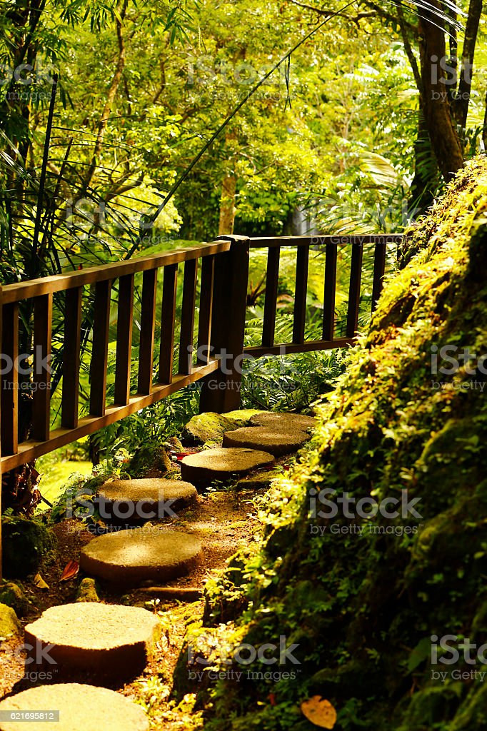 Bali Footpath in Jungle stock photo