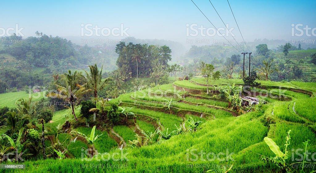 Bali rice paddy fields with Subak irrigation on rainy day stock photo