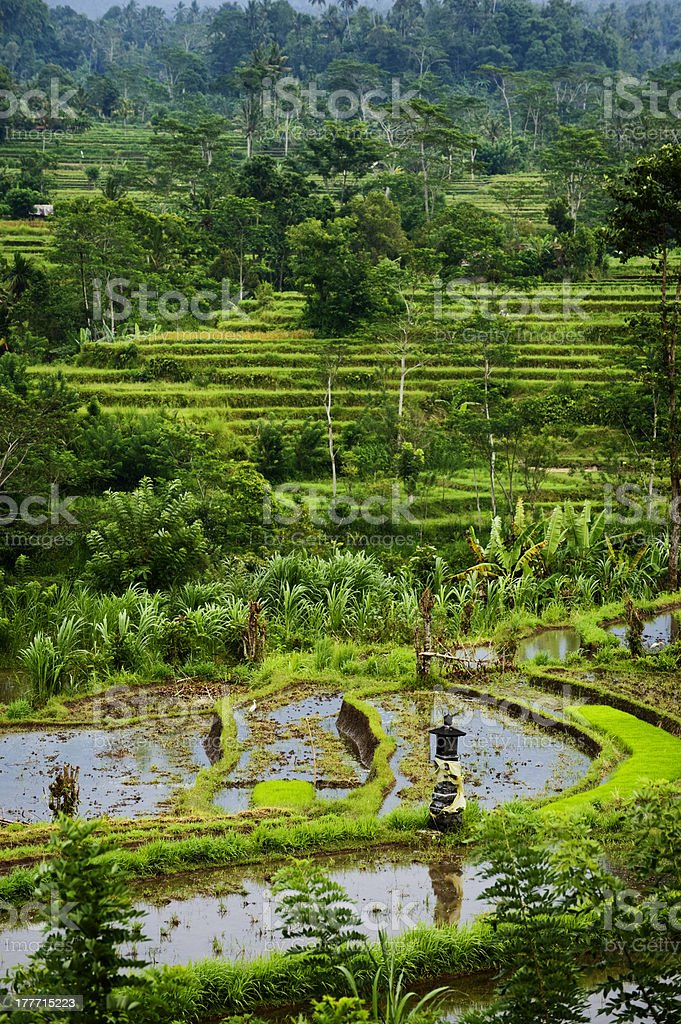 Bali Rice Terraces royalty-free stock photo