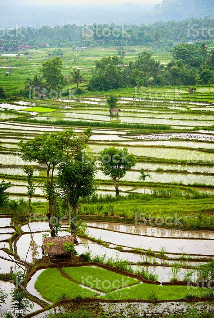 Bali Rice Terraces. royalty-free stock photo