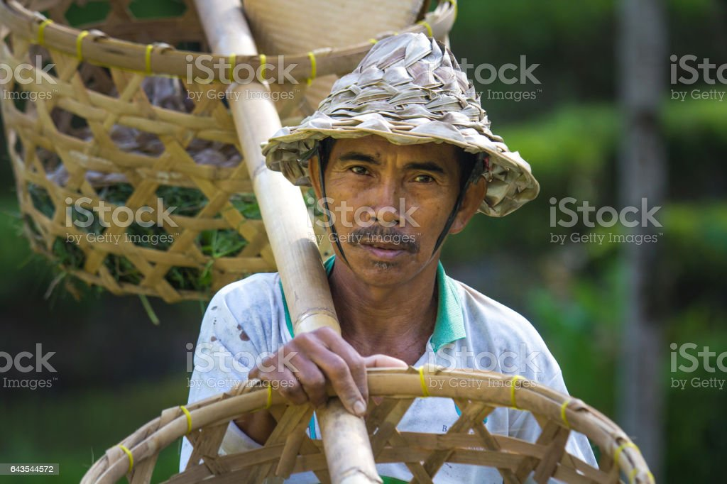 Balinese rice farmer with baskets. stock photo