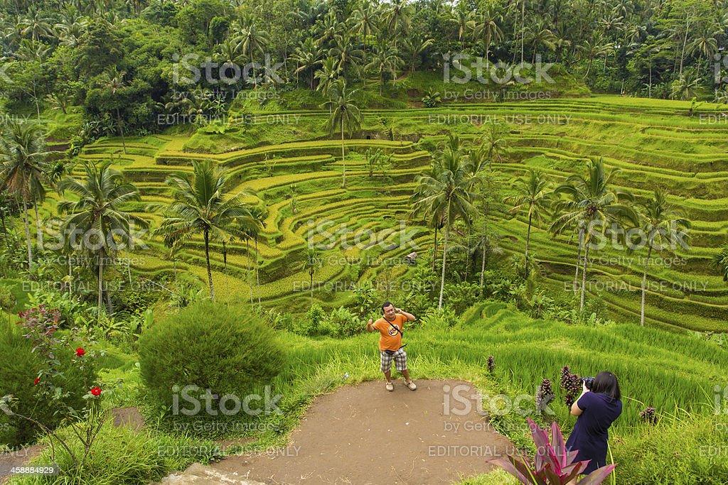 Balinese Rice Paddy Terraces Tourist Photo royalty-free stock photo