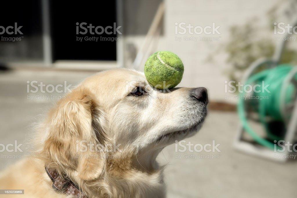Ball Balance stock photo
