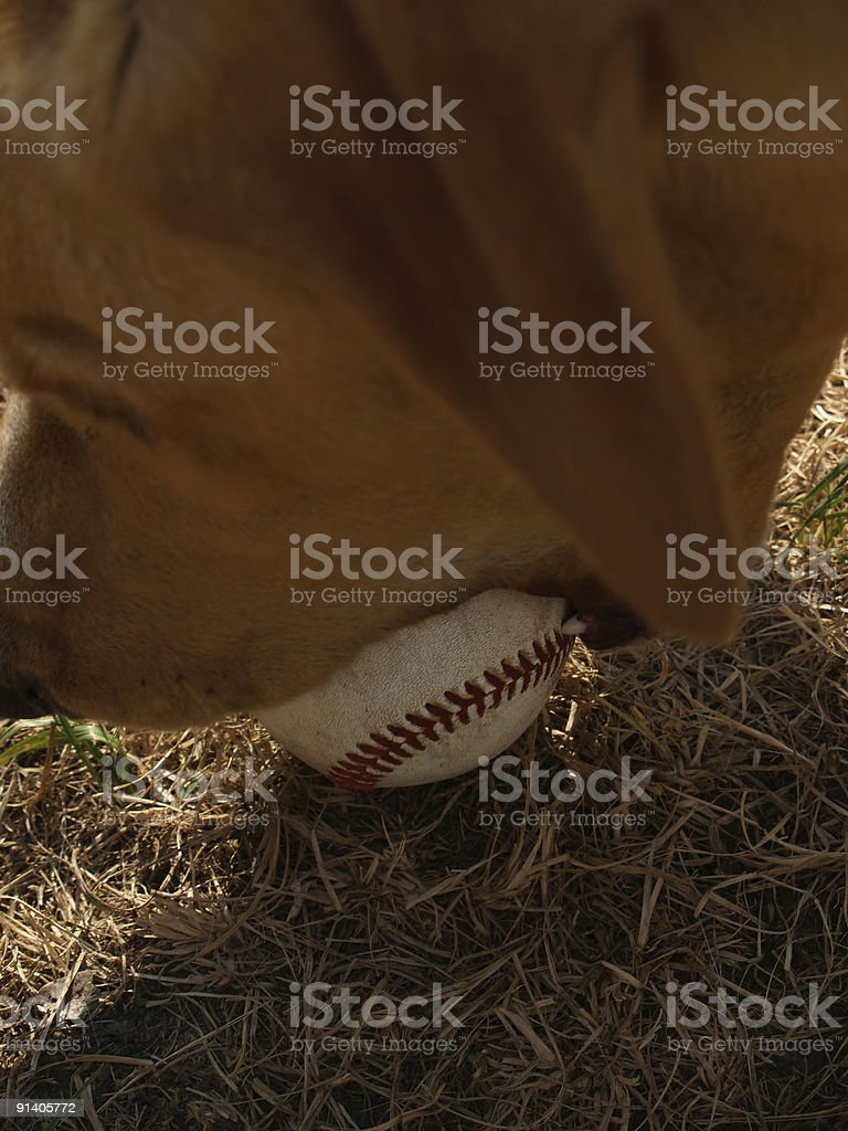 Ball In Mouth royalty-free stock photo