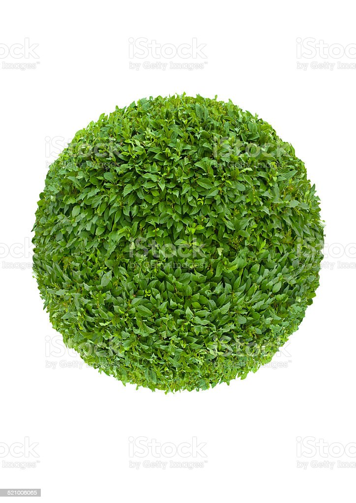 ball of green leaves stock photo
