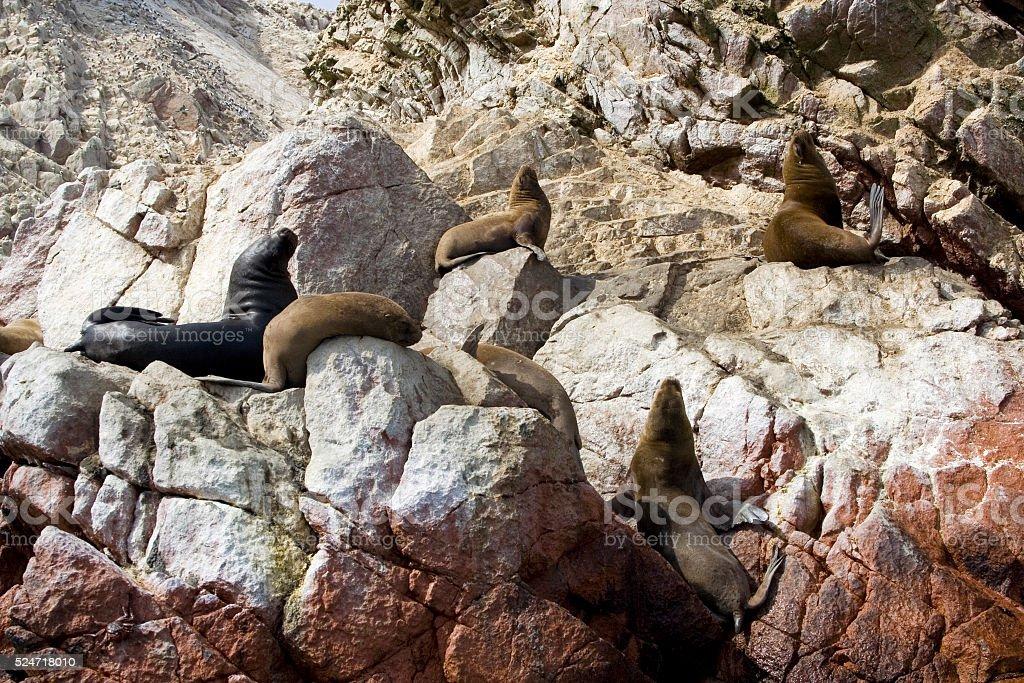Ballestas Islands (Islas Ballestas), Paracas national reserve, Peru stock photo