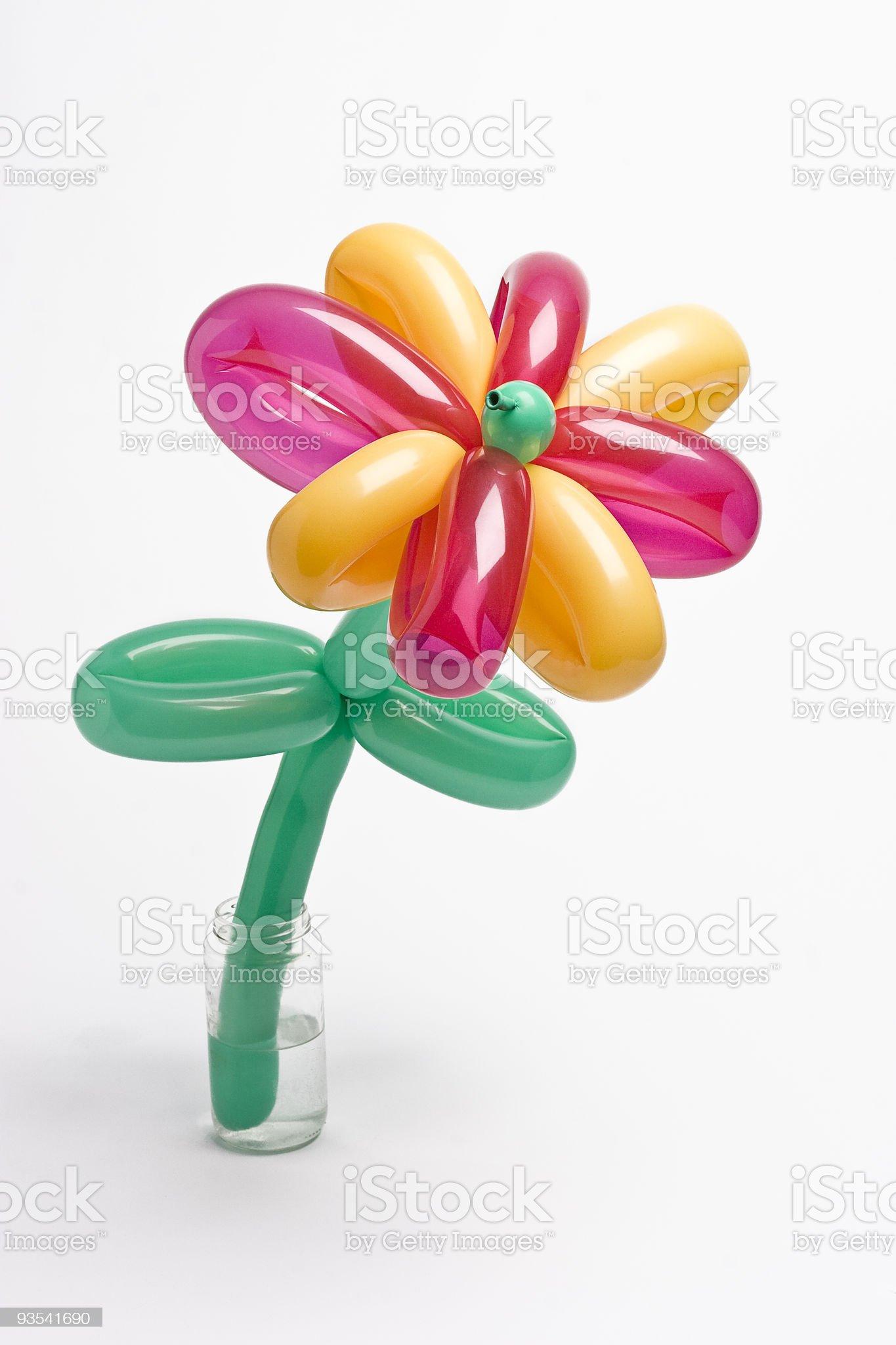 Balloon flower royalty-free stock photo