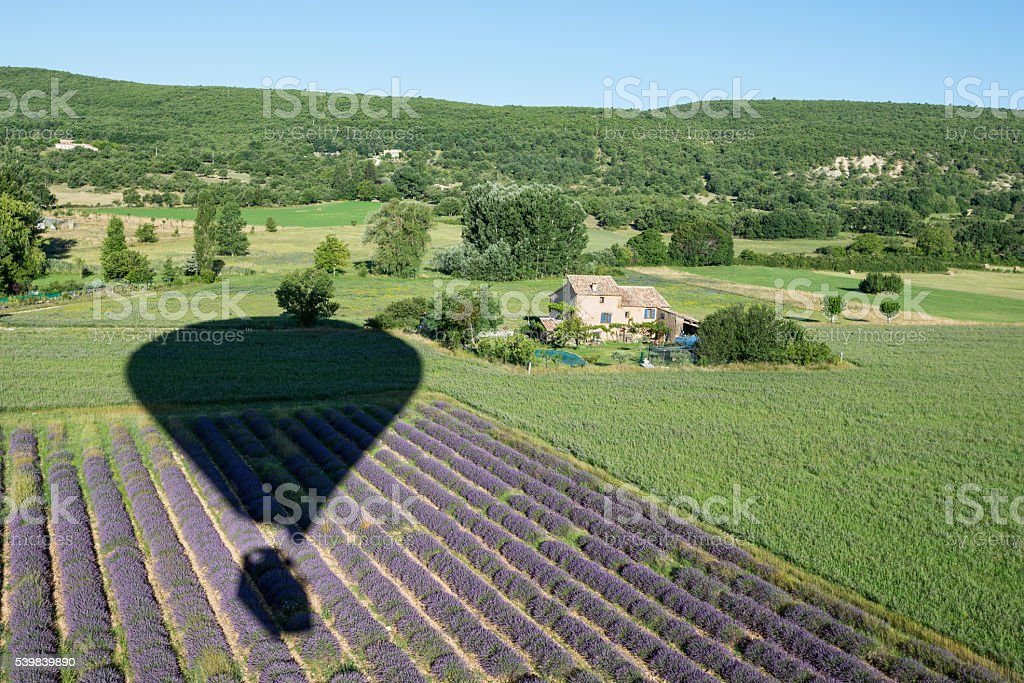 Balloon shadow over lavender bushes and green fields of Provence stock photo