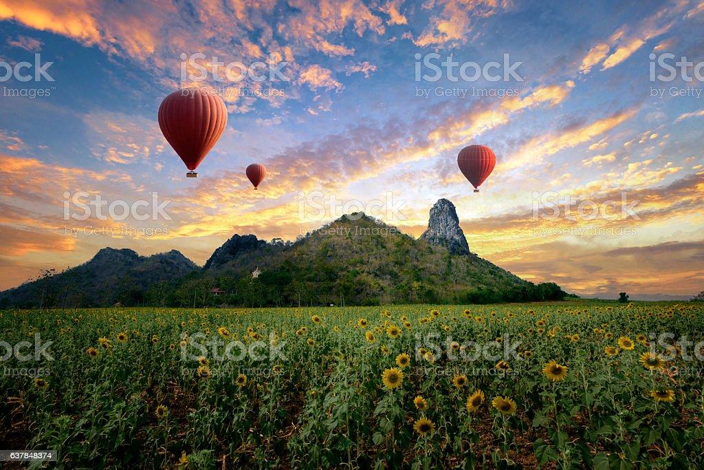 Balloons flying over sunflower field stock photo