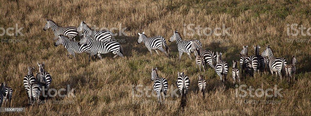 Baloon Safari stock photo