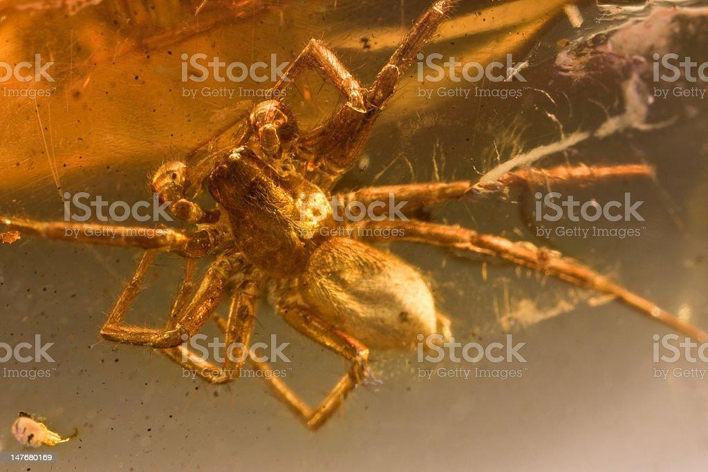 Baltischen Bernstein Spider Top Lizenzfreies stock-foto