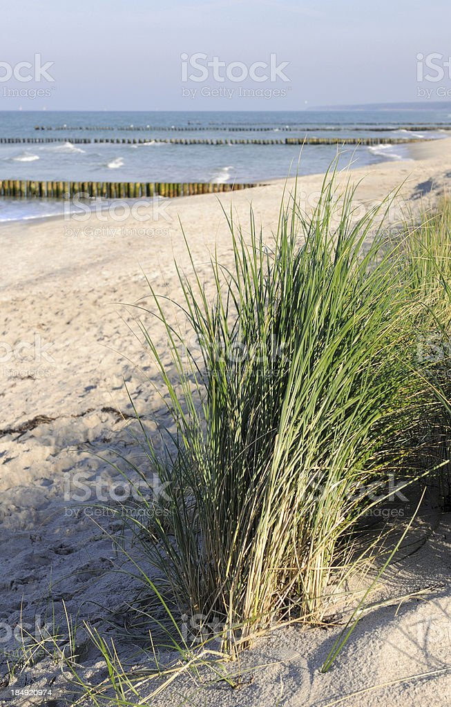 Baltic Sea beach with reed in front stock photo
