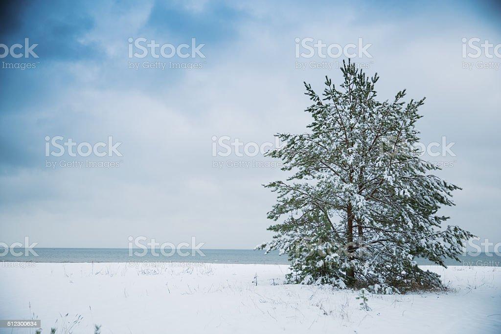Baltic sea view stock photo