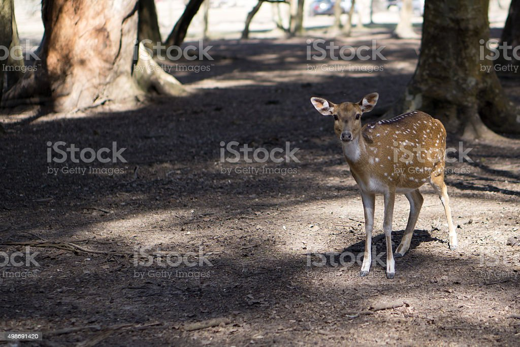 Bambi in the forest Venado en el bosque stock photo