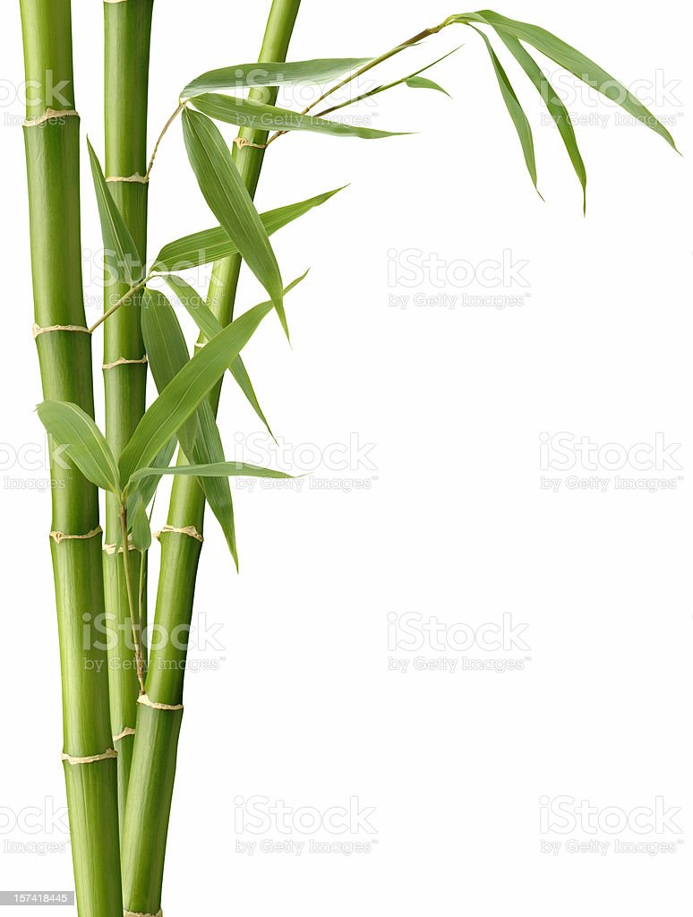 Bamboo and Leaves stock photo