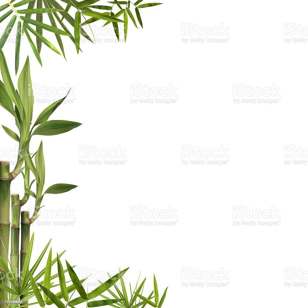 Bamboo background frame isolated on white stock photo