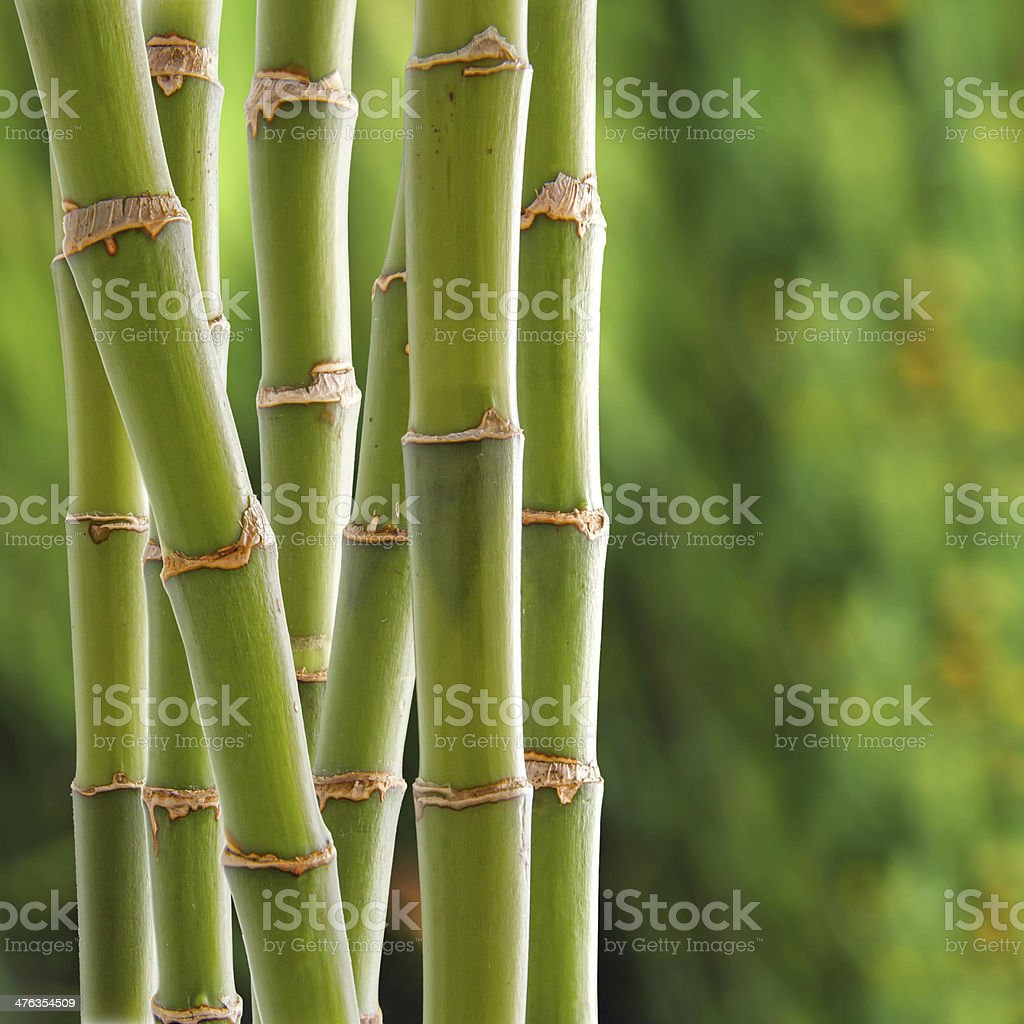 Bamboo backgroung stock photo