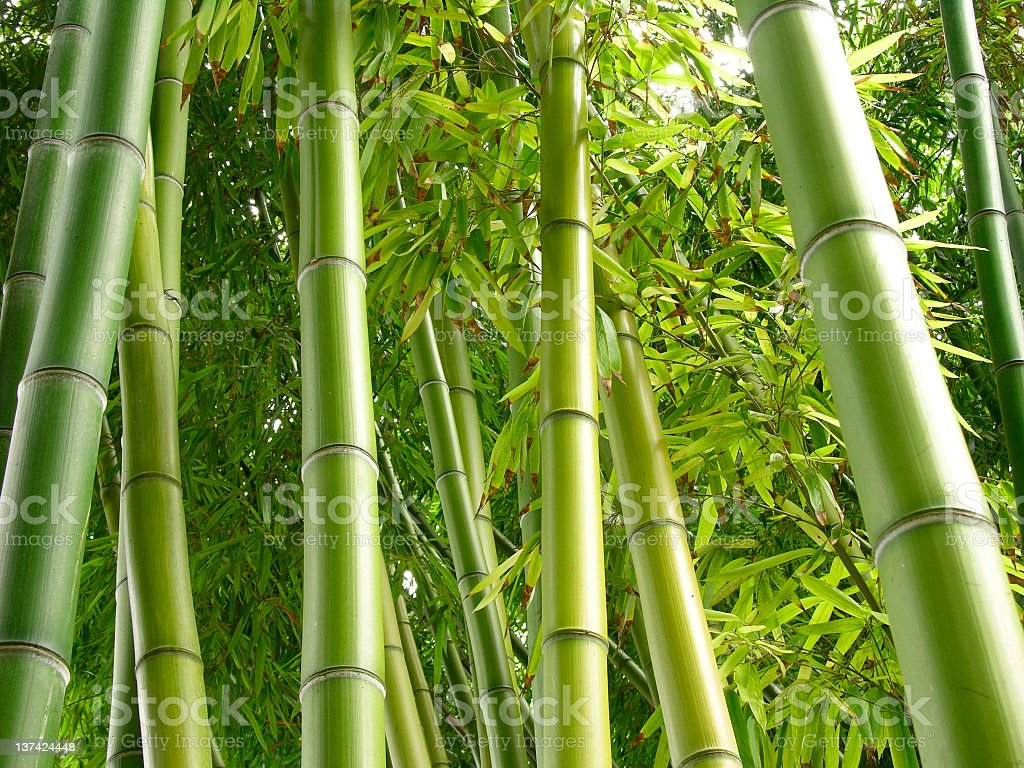 Bamboo bark growing in a jungle stock photo