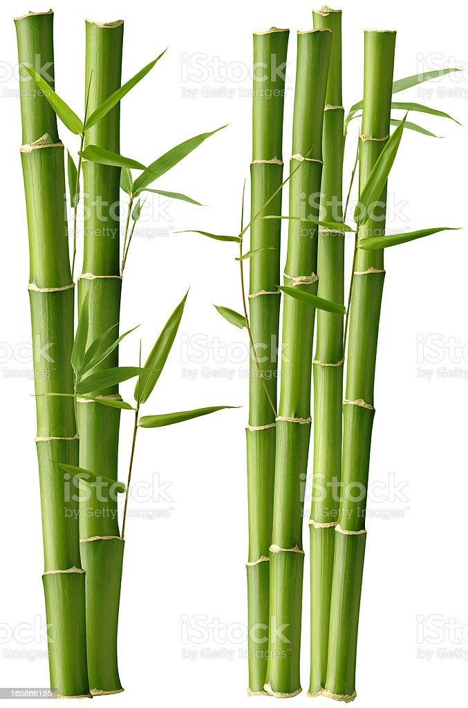 Bamboo Beauty stock photo