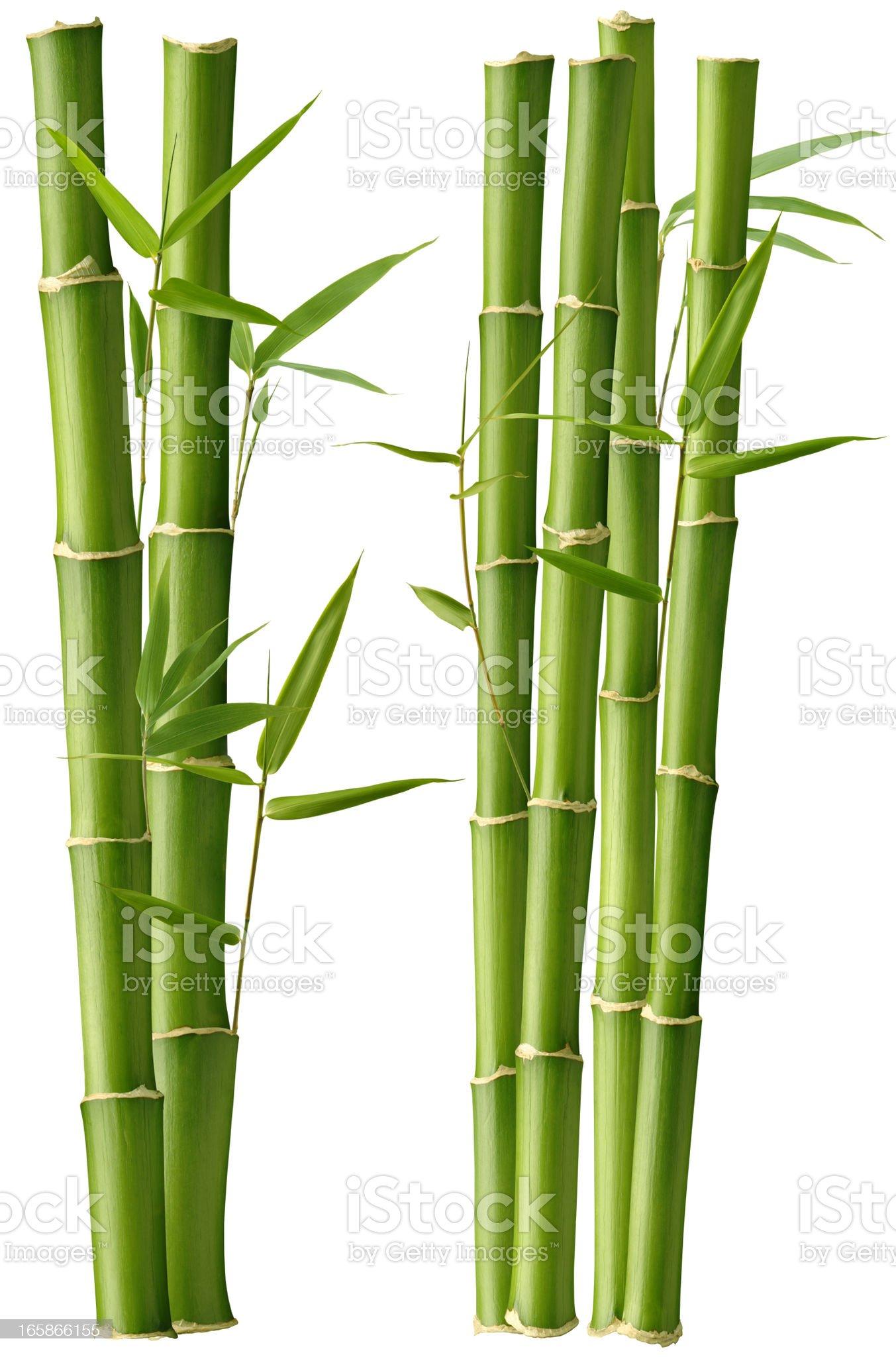 Bamboo Beauty royalty-free stock photo