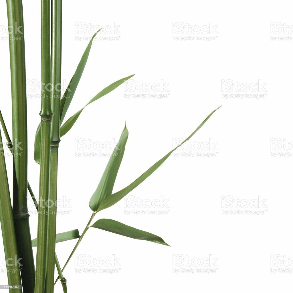 bamboo border royalty-free stock photo