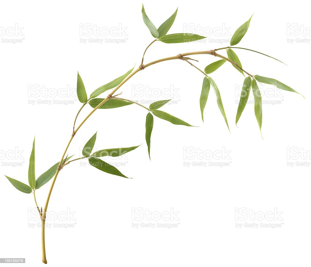 Bamboo Branch stock photo