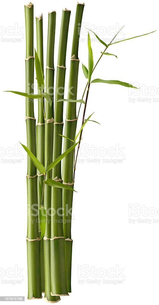 Bamboo Bunch with Leaves stock photo