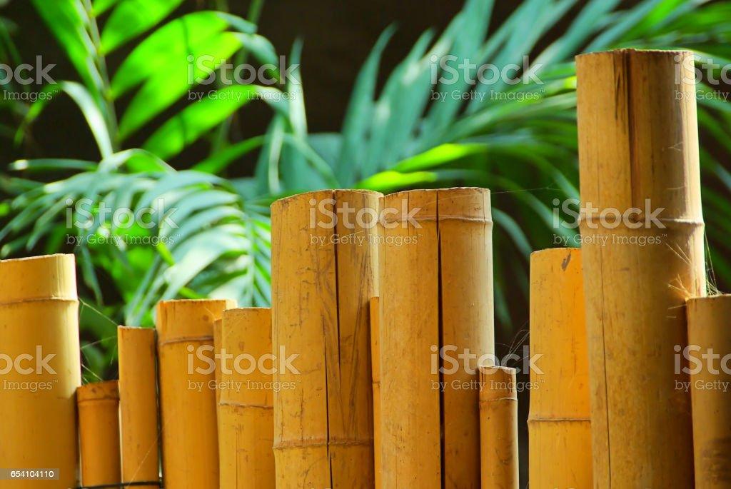 bamboo cane stock photo