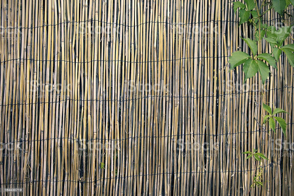 Bamboo Fence Background Pattern with Green Vine stock photo