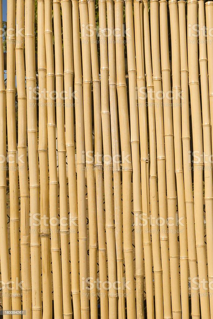 Bamboo Fence, Background stock photo
