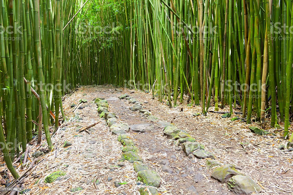 Bamboo Forest and Stone Line Pathway, Hana, Maui royalty-free stock photo