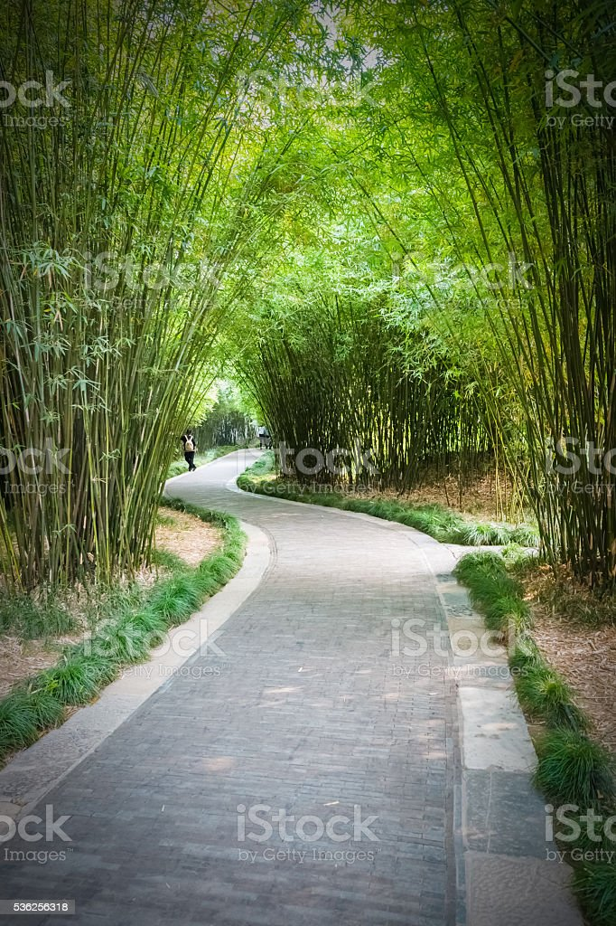 bamboo forest and trail stock photo