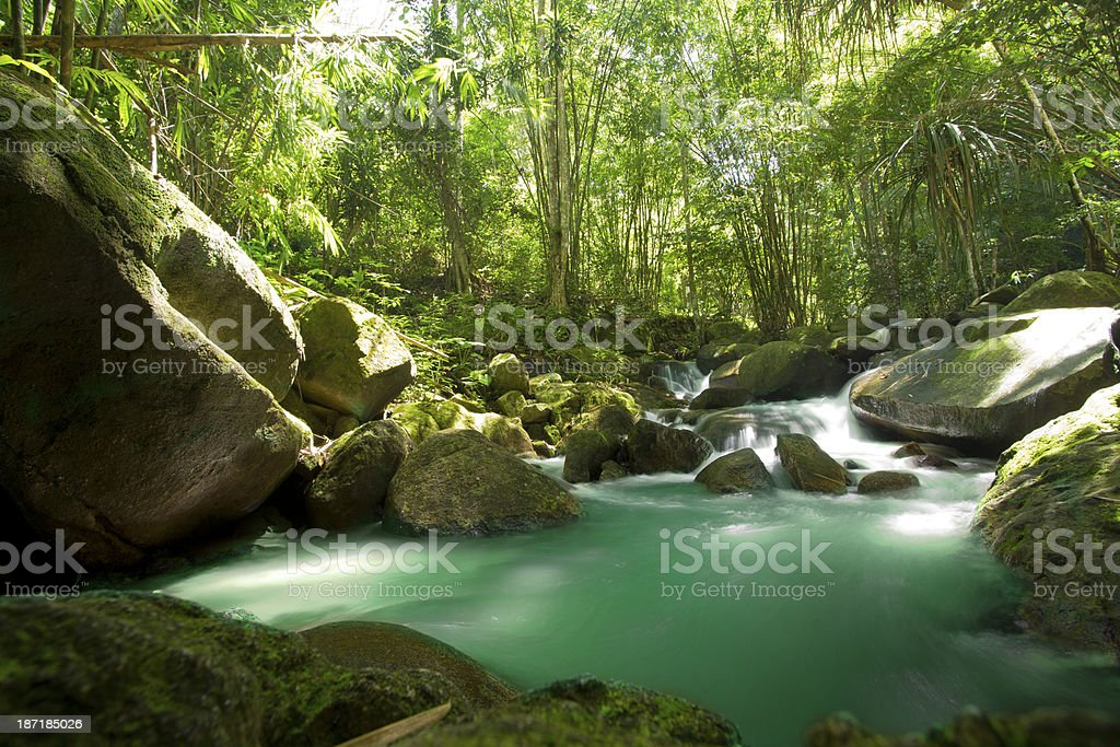 bamboo forest and waterfall royalty-free stock photo