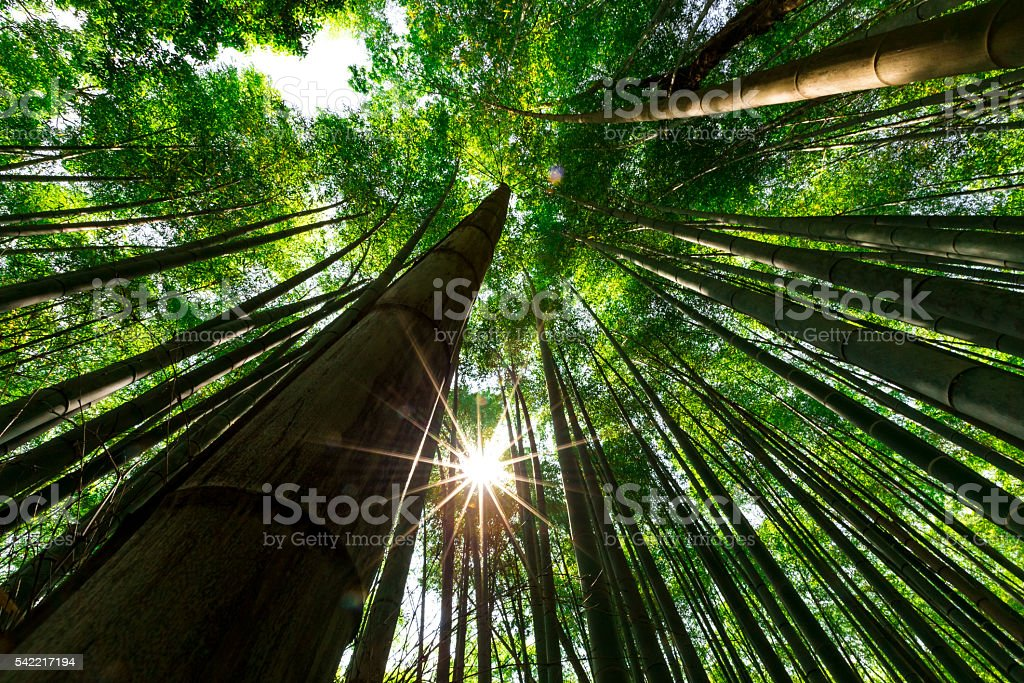 Bamboo Forest, Arashiyama, Kyoto, Japan stock photo