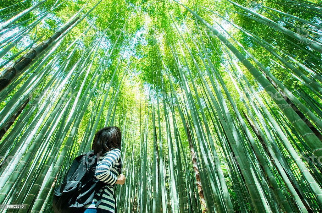 Bamboo forest at kamakura japan stock photo