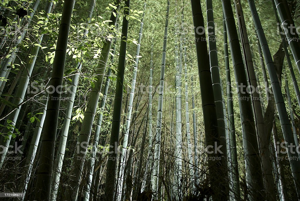 Bamboo forest at night stock photo
